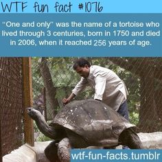 WTF Fun Facts is updated daily with interesting & funny random facts. We post about health, celebs/people, places, animals, history information and much more. New facts all day - every day! The More You Know, Look At You, Good To Know, Did You Know, Wtf Fun Facts, True Facts, Funny Facts, Random Facts, Crazy Facts
