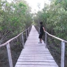 Bakhawan Mangrove park is the largest mangrove park in the Philippines. Bus Terminal, Tourist Spots, Bridges, Philippines, Deck, Walking, Island, Places, Outdoor Decor