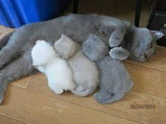 'Scuse me... Your kitten printer is running out of toner.