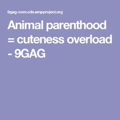 Animal parenthood = cuteness overload - 9GAG