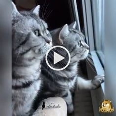 funny cats and dogs compilation. funny animals compilation try not to laugh. funny animals 2019 try not to laugh. Baby Kittens, Cute Cats And Kittens, Cool Cats, Kittens Cutest, Cute Cat Gif, Cute Funny Animals, Funny Animal Pictures, Funny Cat Memes, Funny Cat Videos