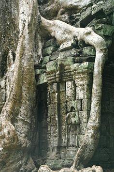 バンテアイ・スレイを後にして、タ・プロームへ到着。 相変わらず、熱帯の植物の生命力を見せ付けられる。  遺跡に食い込むガジュマル(だっけ?) すごいっ!