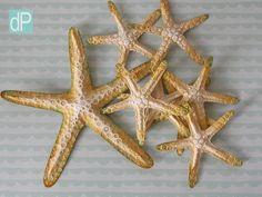 Estrela-do-mar 3D [grande]
