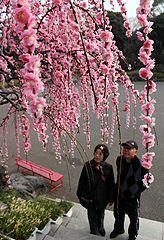 tanabata matsuri osaka