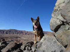 https://flic.kr/p/RGa9x5   Frikka On Volcanic Dike   Frikka climbed onto the top of the dike near Capitol Reef NP to pose for her picture.