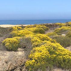 Hot Spots, Filming Locations, Beach Fun, Flower Beds, Yellow Flowers, Beaches, Paths, Vineyard, Trail