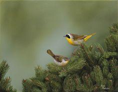 Canadian Wildlife Artist featuring original works of art and prints Original Artwork, Original Paintings, Canadian Wildlife, Wildlife Art, Art For Sale, Bird, Gallery, Artist, Prints