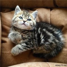 Cute Baby Cats, Kittens And Puppies, Cute Cats And Kittens, Cute Baby Animals, Cool Cats, Kittens Cutest, Animals And Pets, Pretty Cats, Beautiful Cats