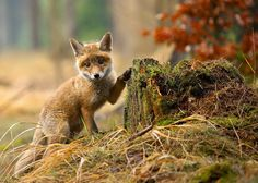 White Wolf : These 15 Photos Will Make You Fall In Love With Foxes