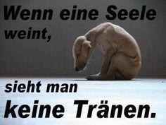 Petition · Landtag: Tierschutz-Polizei - genau, diese ist schon lange überfällig !!! · Change.org
