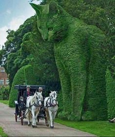 """Many people believe that huge topiary like this """"Watchful Cat"""" are real. It's beautiful but it does not really exist in topiary. It is a work of art by surrealist Richard Saunders. You can find out more about his work by researching """"The Topiary Cat"""". Animals And Pets, Funny Animals, Cute Animals, Topiary Garden, Garden Art, Topiary Trees, Garden Design, Beautiful Cats, Beautiful Gardens"""