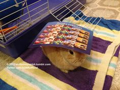 Stamps, Stuff on My Rabbit http://sulia.com/my_thoughts/0974cb18-a346-49b8-971c-15cadcefdcd3/?pinner=undefined