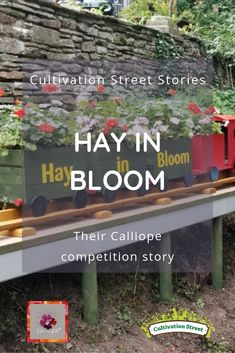 Hay in Bloom their Cultivation Street Calliope competition story Garden Projects, Garden Ideas, Great Western, Geraniums, Competition, Planters, Bloom, Community, Gardening