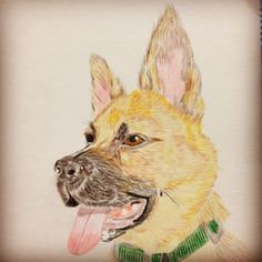 German Sheperd drawing in colored pencil