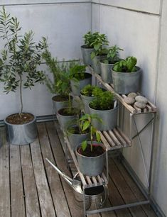 Galvanized Steel Pots | Love these smaller ones.  I use horse troughs for raised bed veggie gardens and fountains too.  Good idea, these petites, you can move them around easily too!