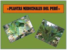 1 DIAPOSITIVAS DE PLANTAS