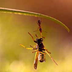 Ant and wasp