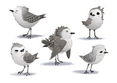 Meet Piper, the world's most adorable Sanderling, in concept form!
