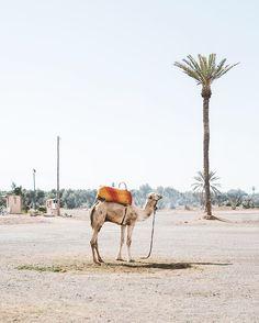 #marrakechunfolded                                                                                                                                                                                 More