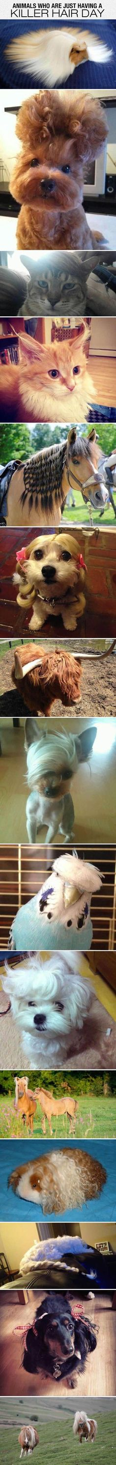 Animals Who Are Having A Killer Hair Day cute animals dogs cat cats adorable dog puppy animal pets horse kitten funny animals funny pets funny cats funny dogs