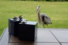 Great Blue Heron eyeing Designer Lacquer Boxes from Bodhi Tree Collections