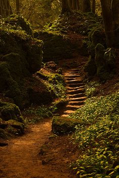 forest path forest stairway, puzzlewood, near coleford in the forest of dean, england Forest Of Dean, Forest Path, Forest Fairy, Dark Forest, Beautiful World, Beautiful Places, Landscape Photography, Nature Photography, Photography Tips