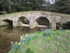 Packhorse bridge,walsingham abbey looking splendid in the spring sunshine surrounded by daffs! #VisitNorfolk
