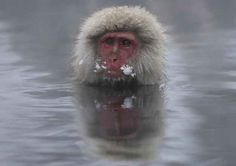 These Snow Monkeys Keeping Warm In A Hot Spring Are Very Happy With Life