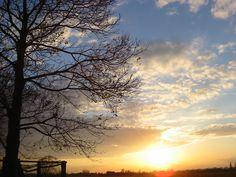 Evening sky and Castanea sativa at Bisselingskaat Organic Flowers (NL)