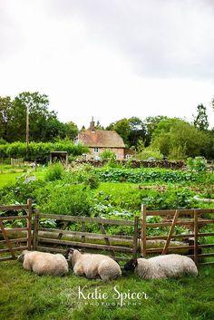 pinterest kitchen gardens | Kitchen garden with sheep