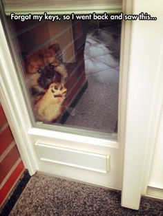 This person went back inside their house to get theirs keys and saw the dog waiting outside.