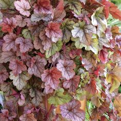 LOD, foundation plants... I think Mark would like this because of the varied leaf color