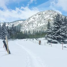 Snowshoeing after a heavy snowfall at Indian Peaks Wilderness on Tuesday. The snow was so fluffy the shoes didn't do much to hold me on top so we trampled along already broken trails.  #hessietrail #indianpeakswilderness #colorado #visitcolorado #coloradolive #cometolife #coloradoliving #snowshoe #lumikenkäily #talvi #winter #travel #matka #reissu #nordicnomads (via Instagram)