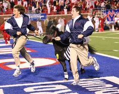 """SMU mascot Peruna VIII channeled the spirit of his predecessor Peruna V (who kicked and killed the Fordham Ram) when he killed a goat at his ranch, adding to his legacy as """"deadliest mascot""""."""