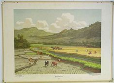 Rijstbouw,  Java, oude schoolplaten, indie, bali, indonesia