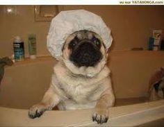 Une bonne douche  A good shower
