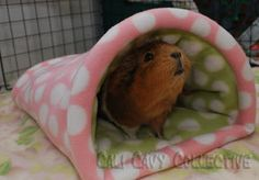 Cali Cavy Collective: a blog about all things guinea pig: toys and accessories