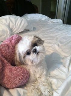 The prettiest princess in the whole wide world. Shih Tzu Love Your Dog? Visit our website NOW!