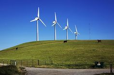 Forget Fracking—Wind Energy Prices Hit a Record Low in the U.S. | TakePart