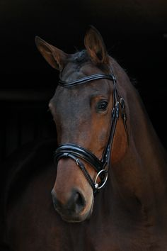 BR Kingston Dressage Bridle