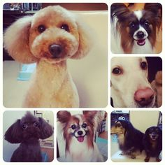 My lovely dogs(*^^*)