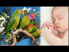 Relax, Parrot, Bird, Youtube, Animals, Parrot Bird, Animales, Animaux, Birds