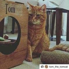 #Repost @tom_the_tomcat (@get_repost)  Not sure whether I should step out or just sit here  #bestpet #perfectface #cat #cats #catsofinstagram #catstagram #gingercat #gingercats #gingertabby #gingercatsrule #gingercatsofinstagram #catlady #gingerstripes #bestcataward #catlife #catlife #catlove #catlover #catlovers #catnap #catnaps #catnip #catniptoy #catoftheday #catoftheweek #catoftoday #catofworld #ilovemypet #ilovemycat