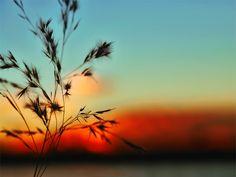 #3946 Flora, Sunrise, Coast, Celestial, Outdoor, Outdoors, Sunrises, Sunrise Photography, The Great Outdoors