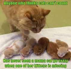 Anyone who thinks cats can't count has never seen a mama cat go crazy when one of her kittens is missing.