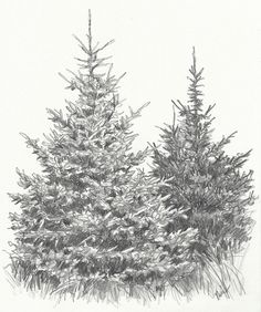 How to Draw Evergreen Trees | NorthLightShop.com