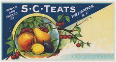S.C.Teats Williamson, New York Vintage 1915 - 20's Stone Litho Unused Fruit Crate Label by VintagePaperTrail on Etsy