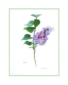 Lovely lilac watercolor? I'm in. Lilac Botanical  Original Watercolor by Lisalawsonartworks on Etsy, $155.00