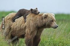 Momma Bear carrying Baby Bear