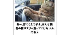 猫たちによる傑作ボケてをご紹介! 4番のニャンコ、うちにも来て!